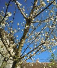 edc cerisier 900